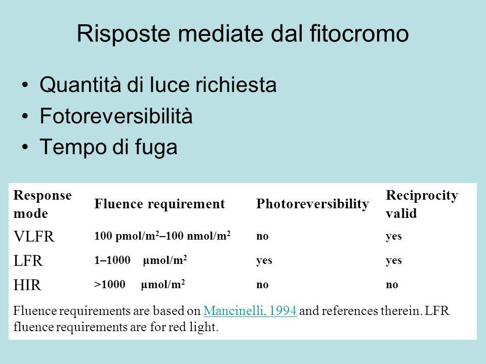 Risposte mediate dal fitocromo Quantità di luce richiesta Fotoreversibilità Tempo di fuga Response mode Fluence requirementPhotoreversibility Reciproc