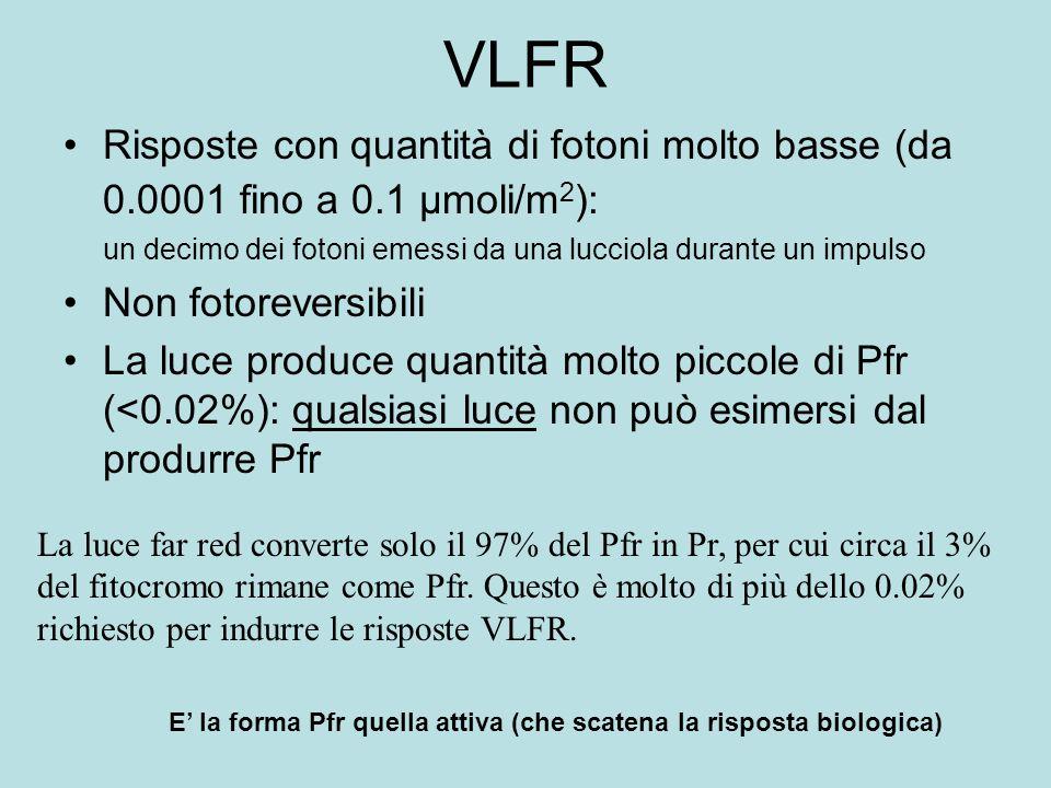 VLFR Risposte con quantità di fotoni molto basse (da 0.0001 fino a 0.1 µmoli/m 2 ): un decimo dei fotoni emessi da una lucciola durante un impulso Non