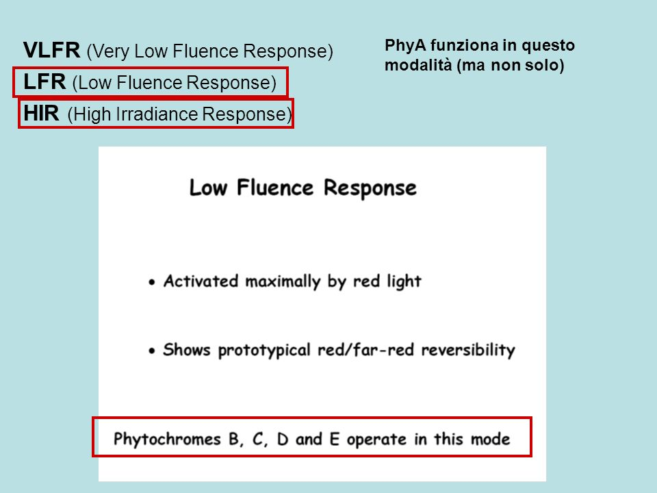 PhyA funziona in questo modalità (ma non solo) VLFR (Very Low Fluence Response) LFR (Low Fluence Response) HIR (High Irradiance Response)