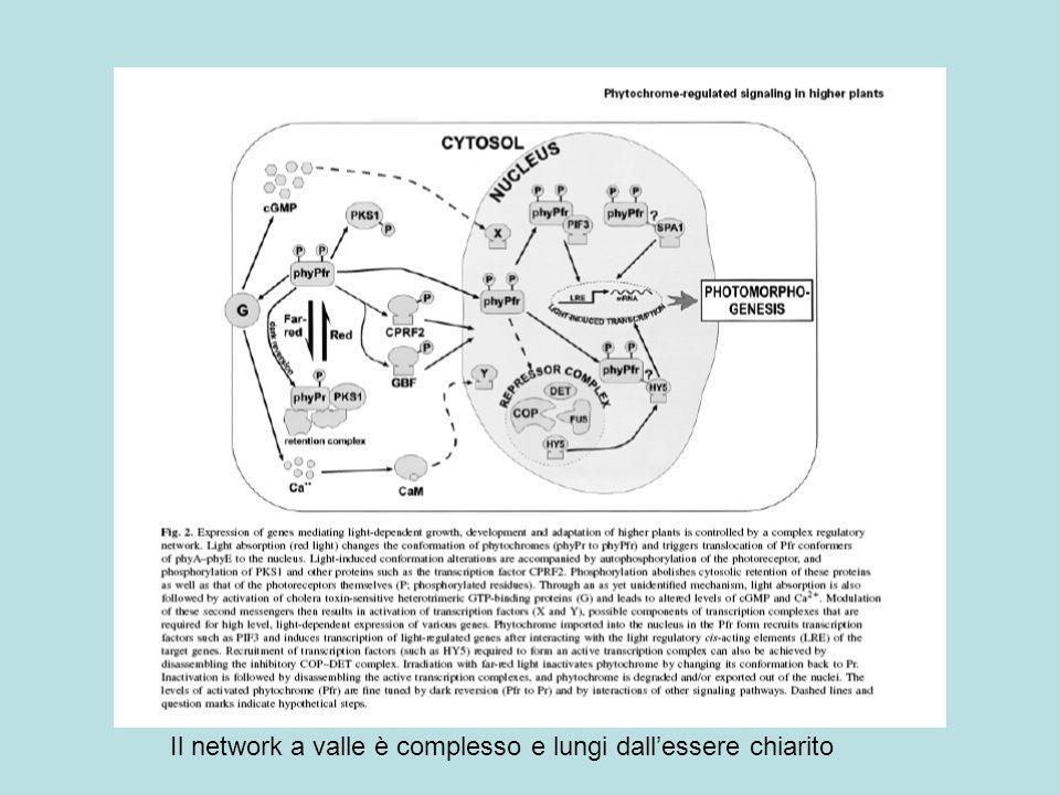 Il network a valle è complesso e lungi dallessere chiarito