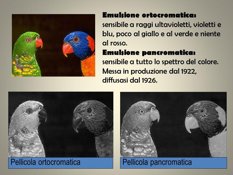 Emulsione ortocromatica: sensibile a raggi ultavioletti, violetti e blu, poco al giallo e al verde e niente al rosso. Emulsione pancromatica: sensibil