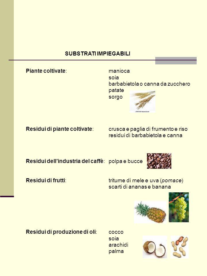 SUBSTRATI IMPIEGABILI Piante coltivate:manioca soia barbabietola o canna da zucchero patate sorgo Residui di piante coltivate: crusca e paglia di frum