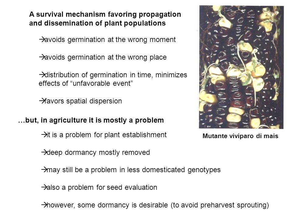 avoids germination at the wrong moment avoids germination at the wrong place distribution of germination in time, minimizes effects of unfavorable eve