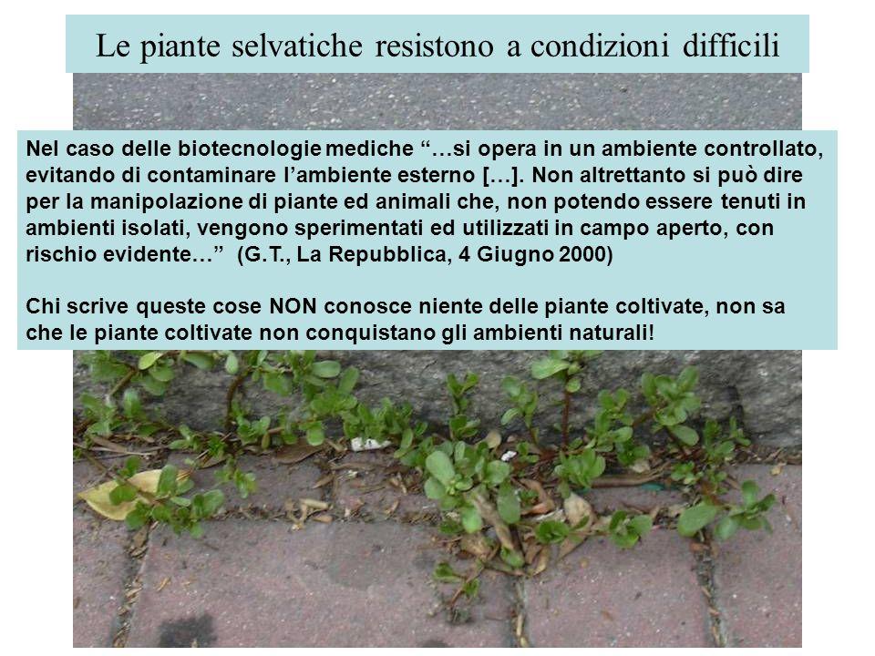 Le piante selvatiche resistono a condizioni difficili Nel caso delle biotecnologie mediche …si opera in un ambiente controllato, evitando di contamina