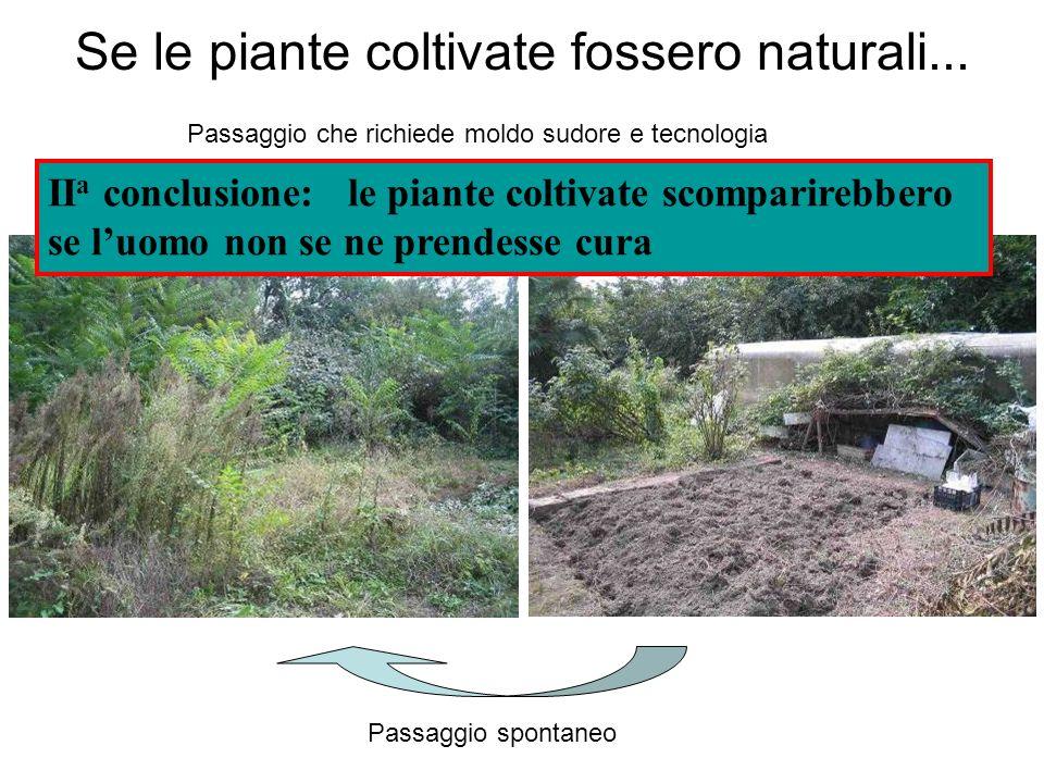 Se le piante coltivate fossero naturali... Passaggio spontaneo Passaggio che richiede moldo sudore e tecnologia II a conclusione: le piante coltivate