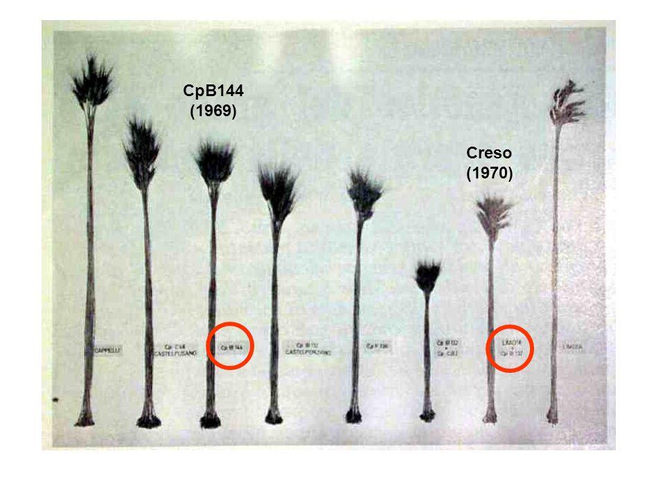 CpB144 (1969) Creso (1970)