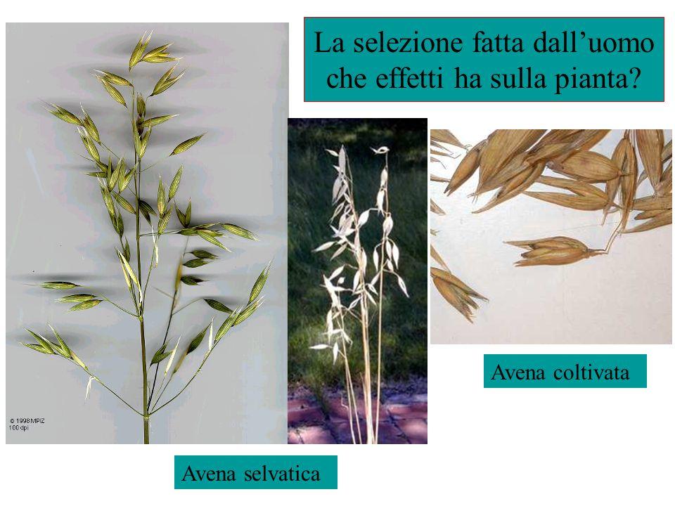http://www.poppyseedtea.com/http://www.poppyseedtea.com/ Poppy seed tea can kill you