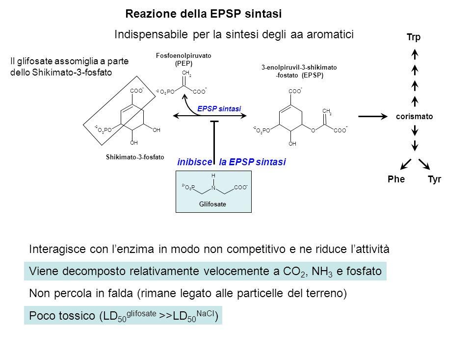 OH OH COO - -2 O 3 PO CH 2 OH O COO - - -2 O 3 PO Shikimato-3-fosfato Fosfoenolpiruvato (PEP) 3-enolpiruvil-3-shikimato -fostato (EPSP) EPSP sintasi C
