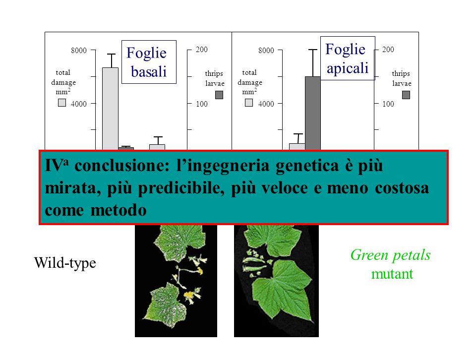 total damage mm 2 thrips larvae total damage mm 2 thrips larvae wtgp mutant 8000 4000 0 200 100 0 wtgp mutant 8000 4000 0 200 100 0 CD Foglie basali F