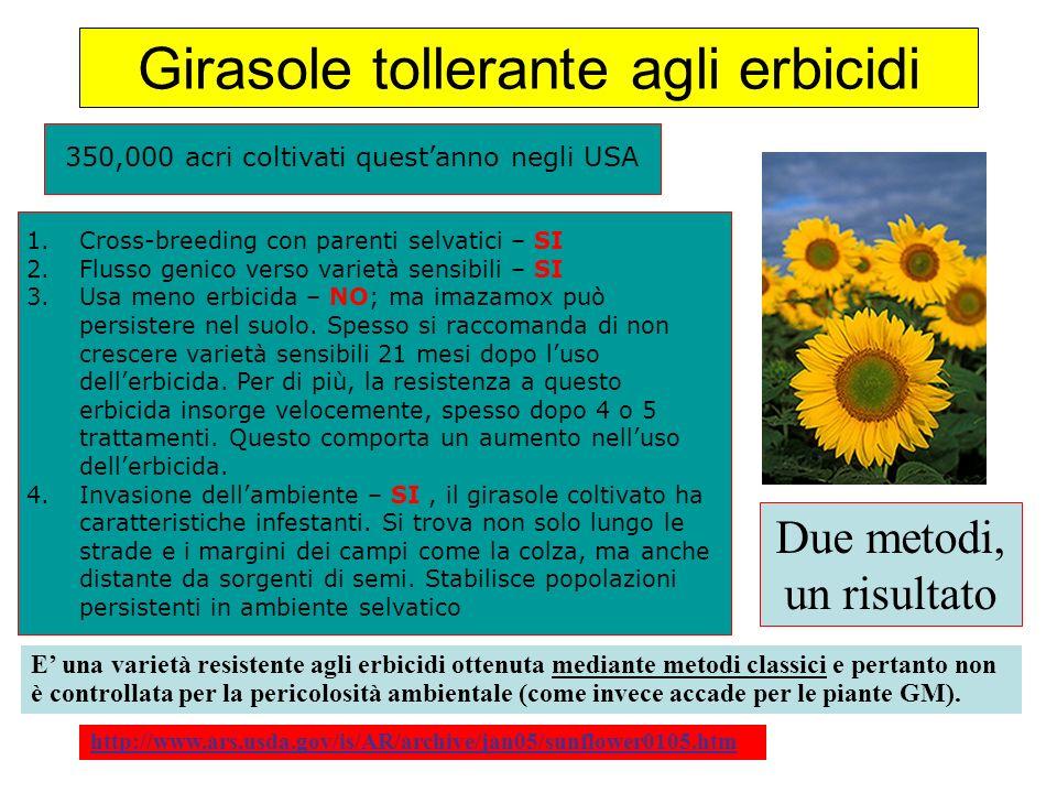 Girasole tollerante agli erbicidi http://www.ars.usda.gov/is/AR/archive/jan05/sunflower0105.htm 350,000 acri coltivati questanno negli USA 1.Cross-bre