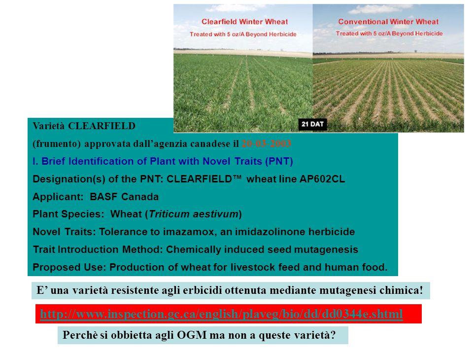 http://www.inspection.gc.ca/english/plaveg/bio/dd/dd0344e.shtml Varietà CLEARFIELD (frumento) approvata dallagenzia canadese il 20-03-2003 I. Brief Id