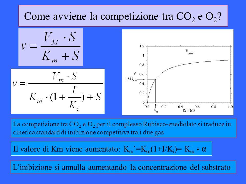 Come avviene la competizione tra CO 2 e O 2 ? Il valore di Km viene aumentato: K m =K m (1+I/K i )= K m α Linibizione si annulla aumentando la concent