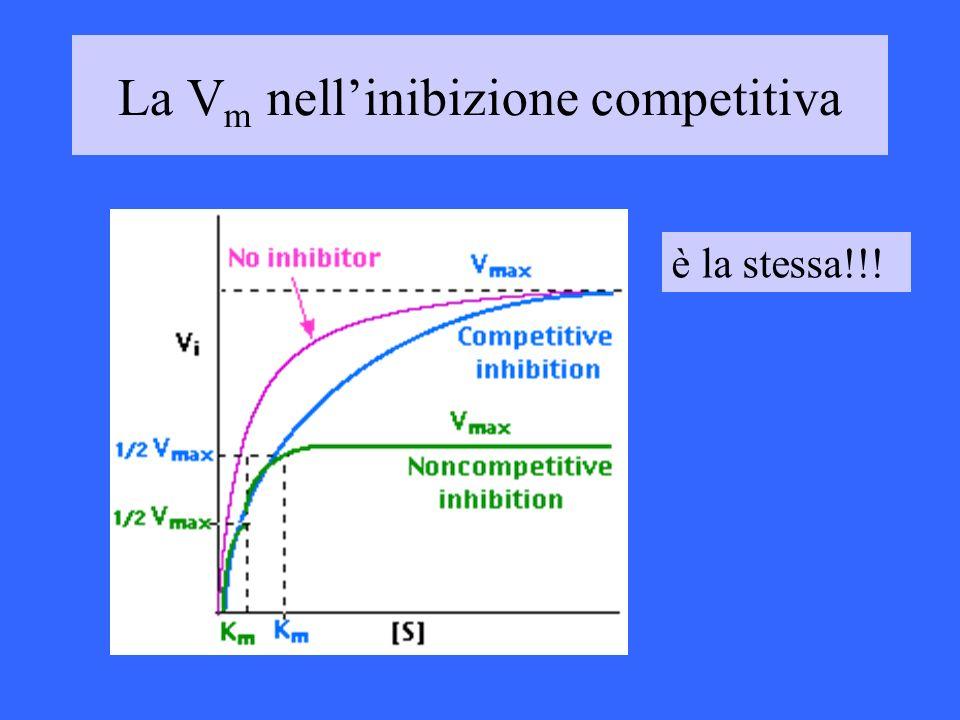 La V m nellinibizione competitiva è la stessa!!!