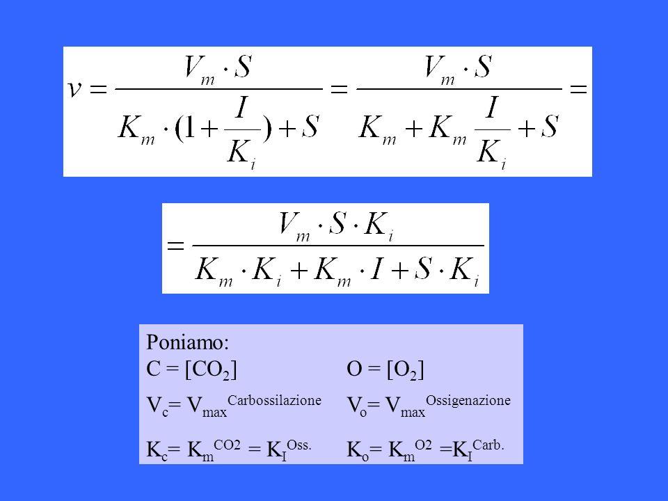 Poniamo: C = [CO 2 ] O = [O 2 ] V c = V max Carbossilazione V o = V max Ossigenazione K c = K m CO2 = K I Oss. K o = K m O2 =K I Carb.