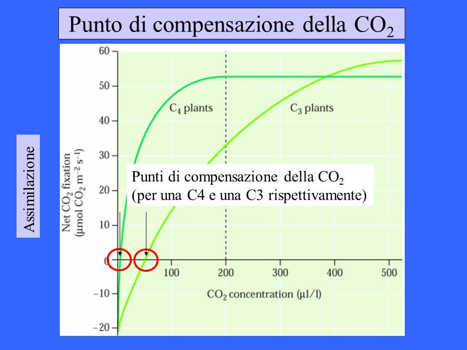Punto di compensazione della CO 2 Assimilazione Punti di compensazione della CO 2 (per una C4 e una C3 rispettivamente)
