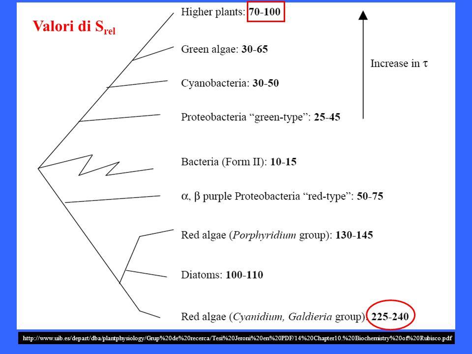 http://www.uib.es/depart/dba/plantphysiology/Grup%20de%20recerca/Tesi%20Jeroni%20en%20PDF/14%20Chapter10.%20Biochemistry%20of%20Rubisco.pdf Valori di