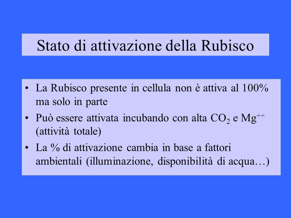 Stato di attivazione della Rubisco La Rubisco presente in cellula non è attiva al 100% ma solo in parte Può essere attivata incubando con alta CO 2 e