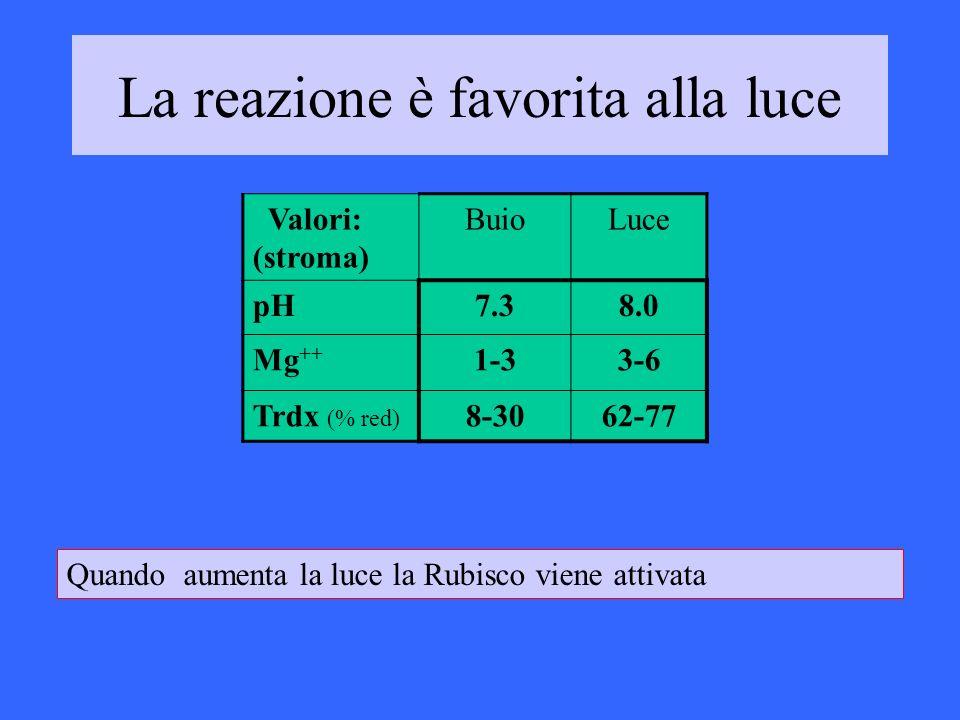 Valori: (stroma) BuioLuce pH7.38.0 Mg ++ 1-33-6 Trdx (% red) 8-3062-77 La reazione è favorita alla luce Quando aumenta la luce la Rubisco viene attiva