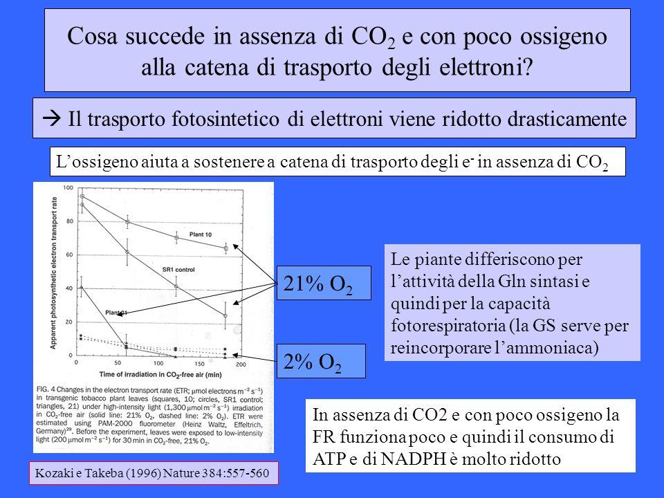 Cosa succede in assenza di CO 2 e con poco ossigeno alla catena di trasporto degli elettroni? 2% O 2 21% O 2 Lossigeno aiuta a sostenere a catena di t