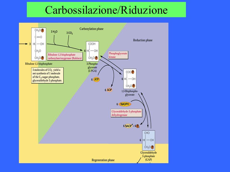 Carbossilazione/Riduzione