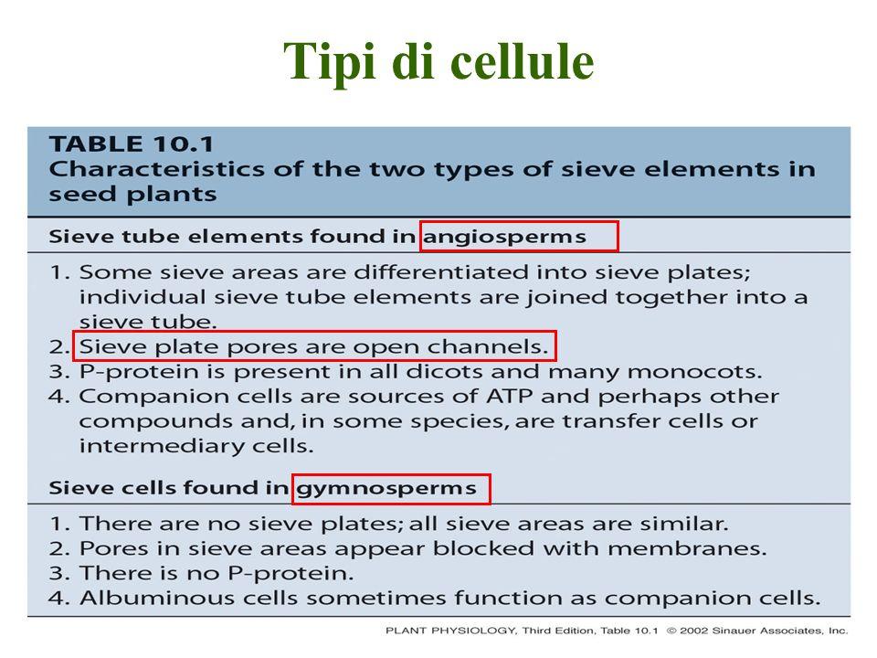 Tipi di cellule
