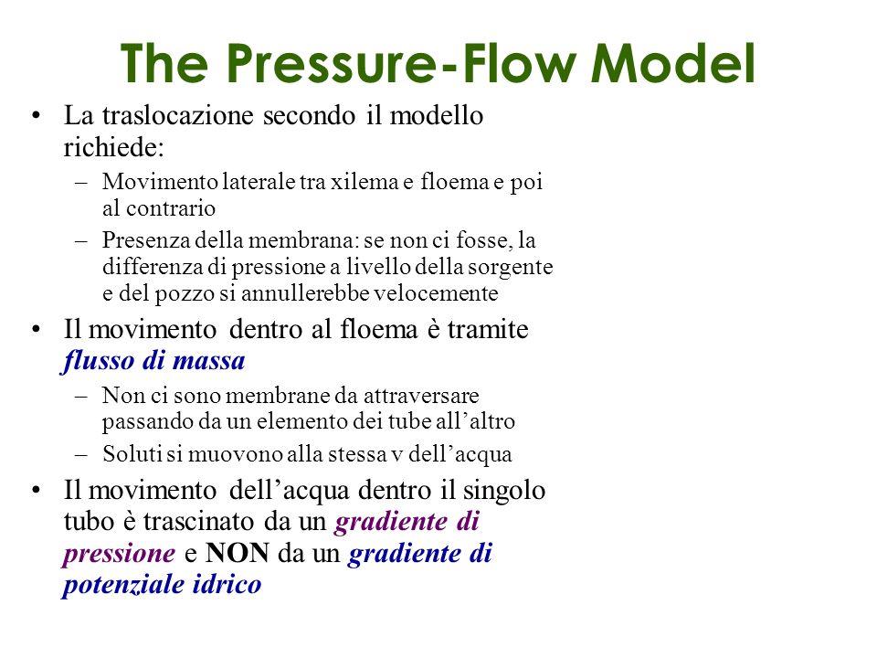 The Pressure-Flow Model La traslocazione secondo il modello richiede: –Movimento laterale tra xilema e floema e poi al contrario –Presenza della membr