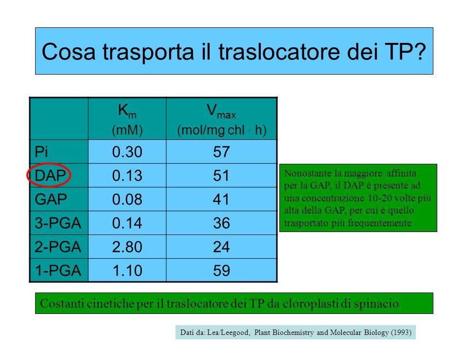 Cosa trasporta il traslocatore dei TP? K m (mM) V max (mol/mg chl · h) Pi0.3057 DAP0.1351 GAP0.0841 3-PGA0.1436 2-PGA2.8024 1-PGA1.1059 Costanti cinet