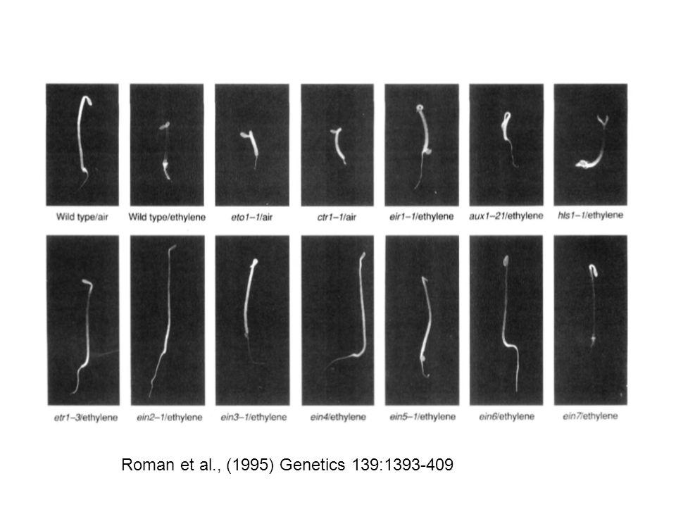 Roman et al., (1995) Genetics 139:1393-409