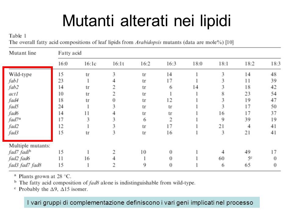 Mutanti alterati nei lipidi I vari gruppi di complementazione definiscono i vari geni implicati nel processo