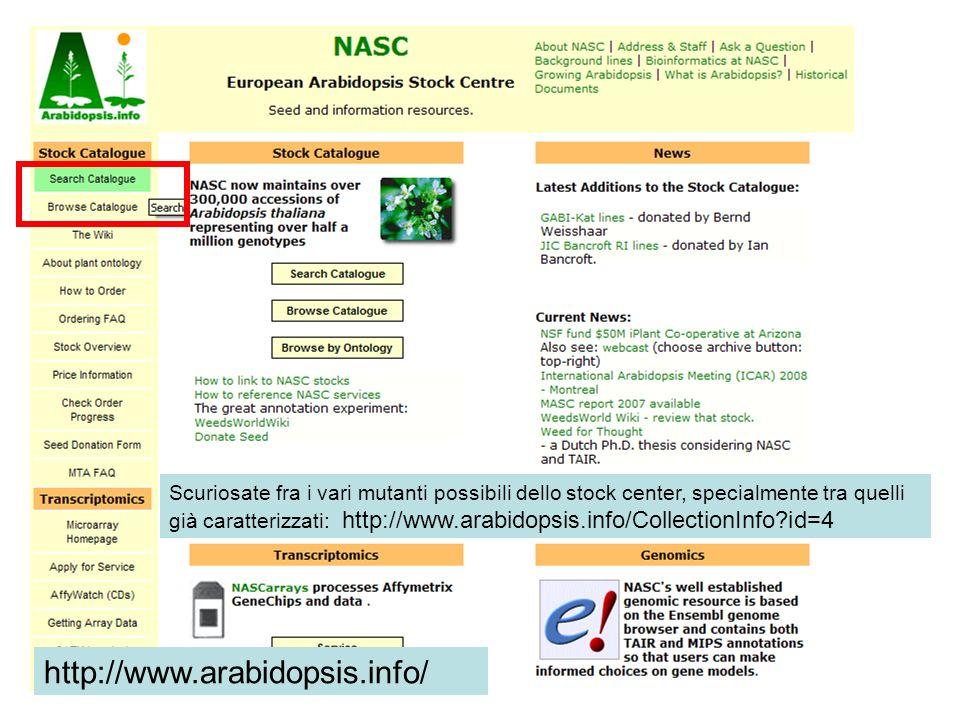 http://www.arabidopsis.info/ Scuriosate fra i vari mutanti possibili dello stock center, specialmente tra quelli già caratterizzati: http://www.arabid