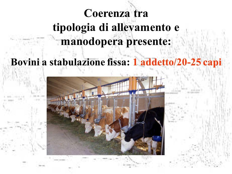 Coerenza tra tipologia di allevamento e manodopera presente: Bovini a stabulazione fissa: 1 addetto/20-25 capi