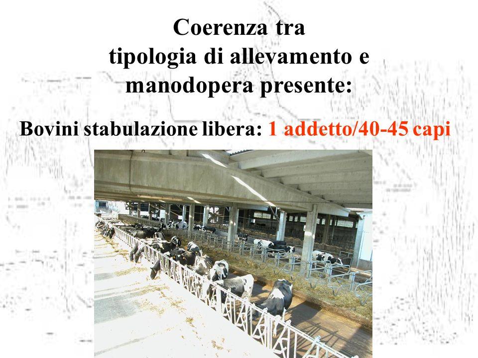 Coerenza tra tipologia di allevamento e manodopera presente: Bovini stabulazione libera: 1 addetto/40-45 capi