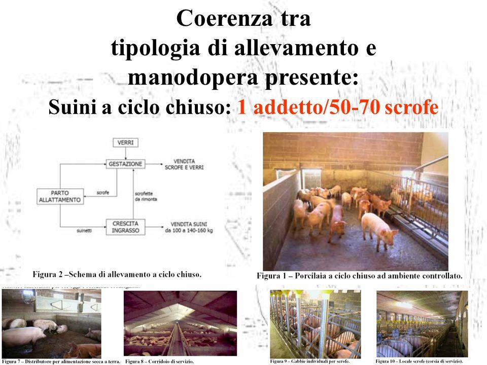 Coerenza tra tipologia di allevamento e manodopera presente: Suini a ciclo chiuso: 1 addetto/50-70 scrofe