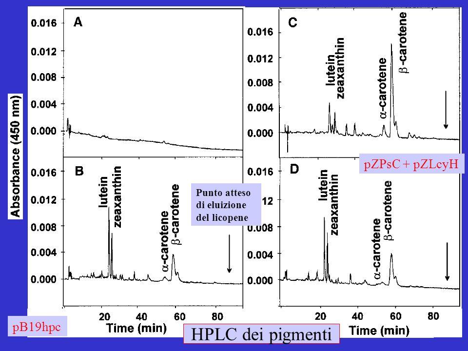 HPLC dei pigmenti Punto atteso di eluizione del licopene pZPsC + pZLcyH pB19hpc