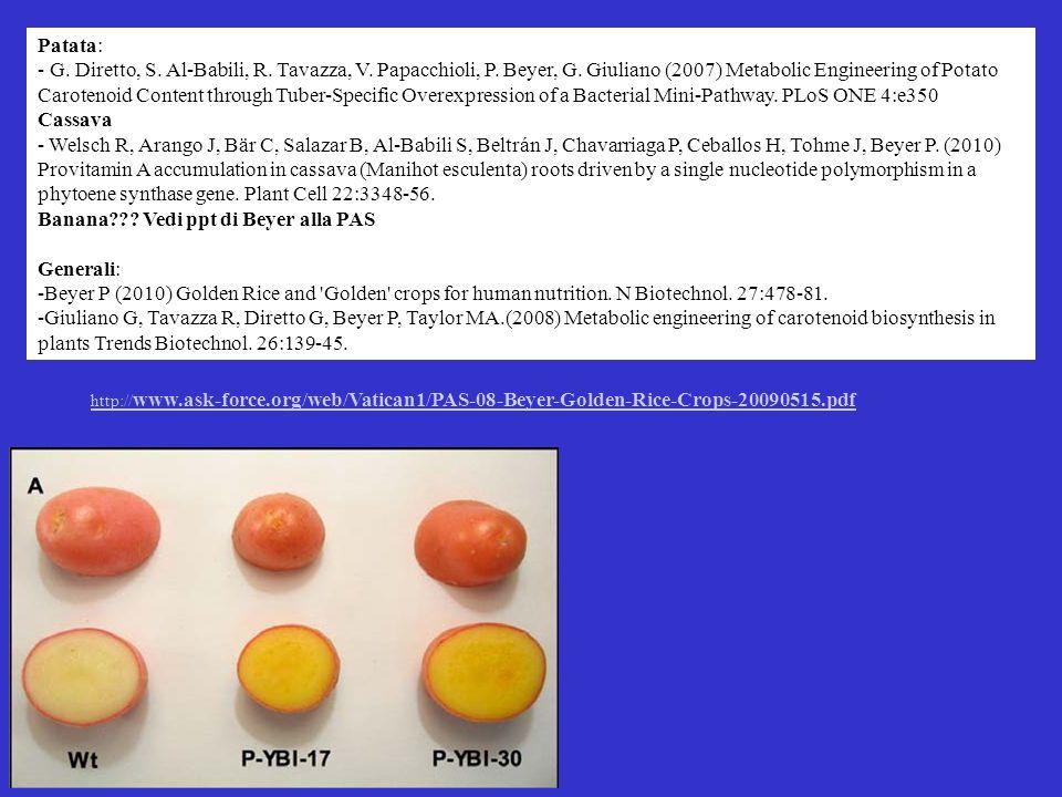 Patata: - G. Diretto, S. Al-Babili, R. Tavazza, V. Papacchioli, P. Beyer, G. Giuliano (2007) Metabolic Engineering of Potato Carotenoid Content throug