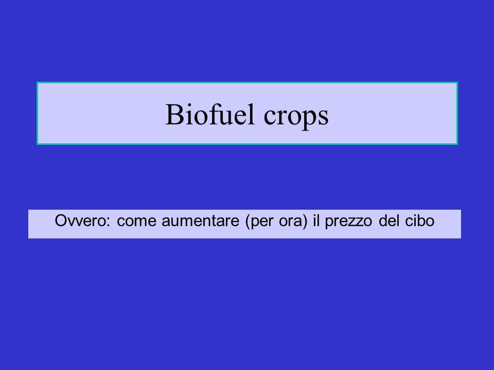 Biofuel crops Ovvero: come aumentare (per ora) il prezzo del cibo