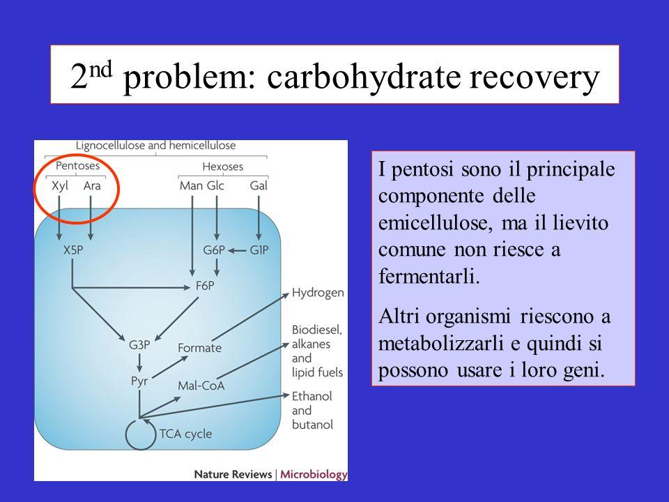 2 nd problem: carbohydrate recovery I pentosi sono il principale componente delle emicellulose, ma il lievito comune non riesce a fermentarli.