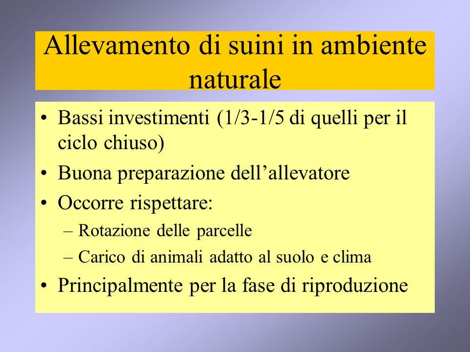 Allevamento di suini in ambiente naturale Bassi investimenti (1/3-1/5 di quelli per il ciclo chiuso) Buona preparazione dellallevatore Occorre rispett