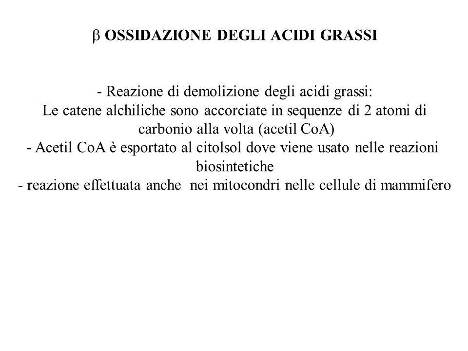 OSSIDAZIONE DEGLI ACIDI GRASSI - Reazione di demolizione degli acidi grassi: Le catene alchiliche sono accorciate in sequenze di 2 atomi di carbonio a