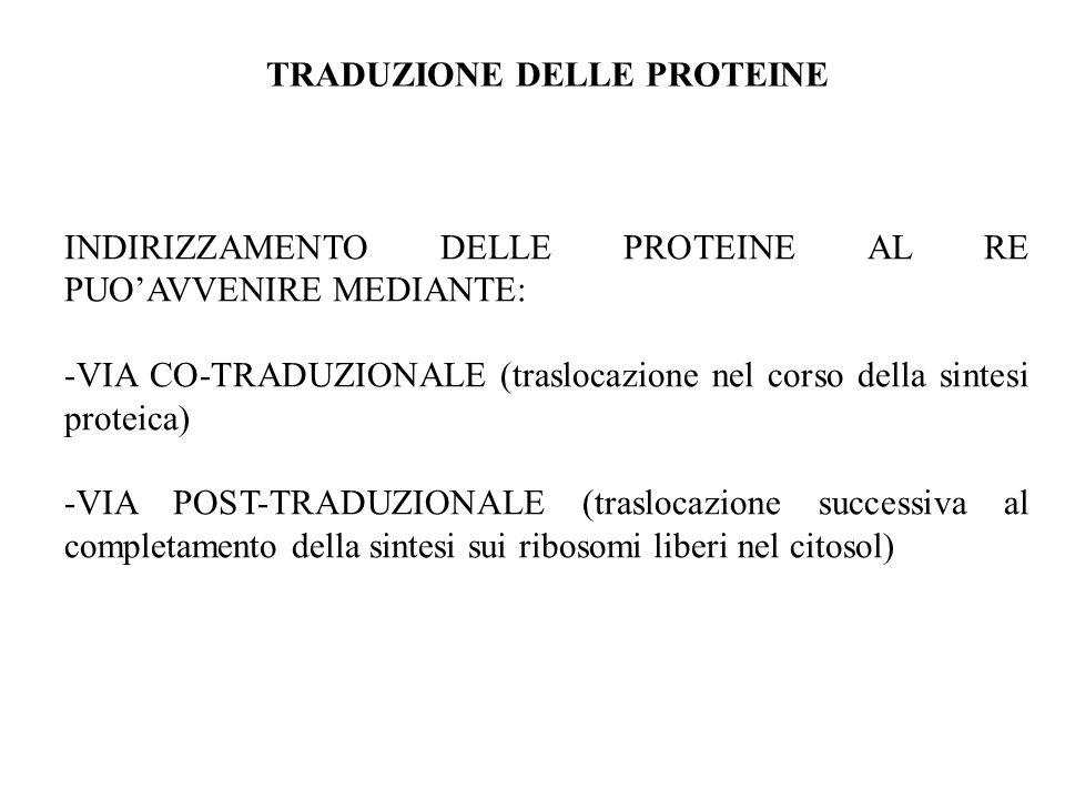 INDIRIZZAMENTO DELLE PROTEINE AL RE PUOAVVENIRE MEDIANTE: -VIA CO-TRADUZIONALE (traslocazione nel corso della sintesi proteica) -VIA POST-TRADUZIONALE