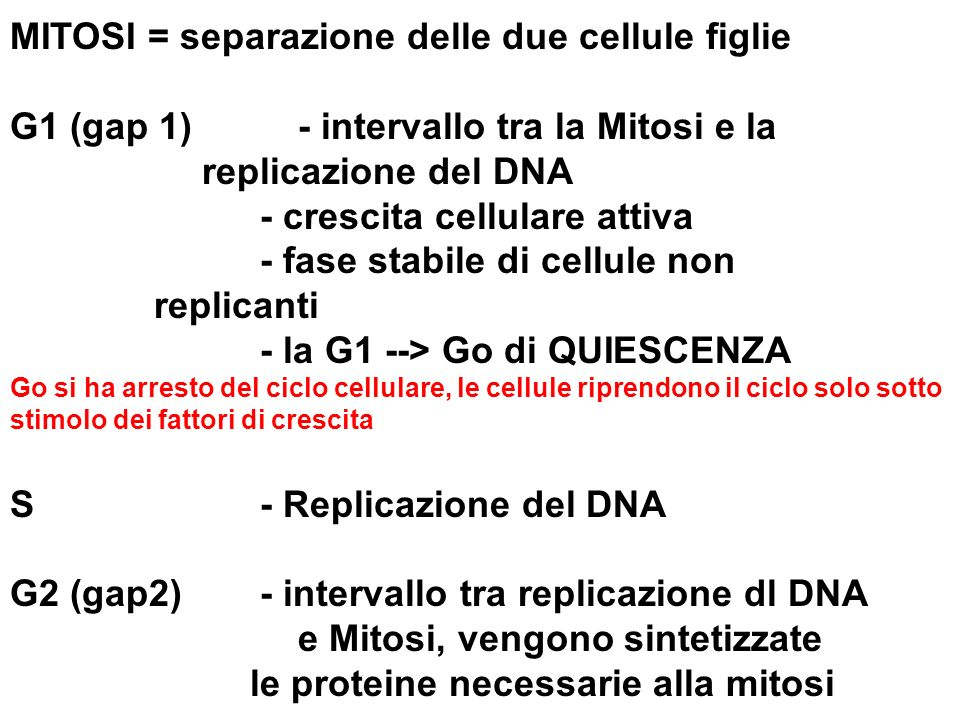 MITOSI = separazione delle due cellule figlie G1 (gap 1) - intervallo tra la Mitosi e la replicazione del DNA - crescita cellulare attiva - fase stabile di cellule non replicanti - la G1 --> Go di QUIESCENZA Go si ha arresto del ciclo cellulare, le cellule riprendono il ciclo solo sotto stimolo dei fattori di crescita S - Replicazione del DNA G2 (gap2) - intervallo tra replicazione dl DNA e Mitosi, vengono sintetizzate le proteine necessarie alla mitosi