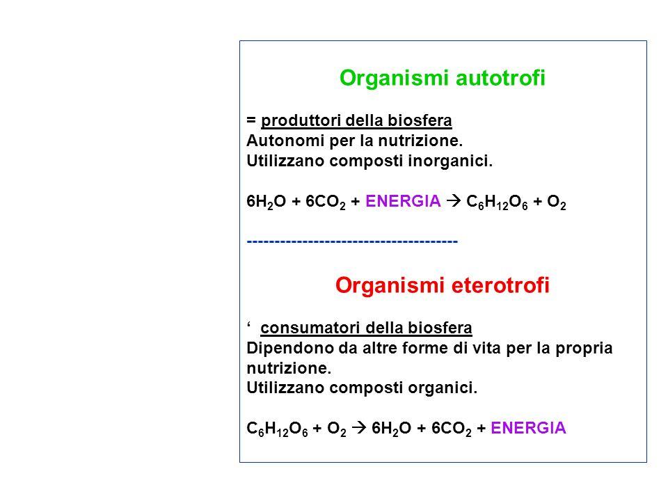 Organismi autotrofi = produttori della biosfera Autonomi per la nutrizione. Utilizzano composti inorganici. 6H 2 O + 6CO 2 + ENERGIA C 6 H 12 O 6 + O