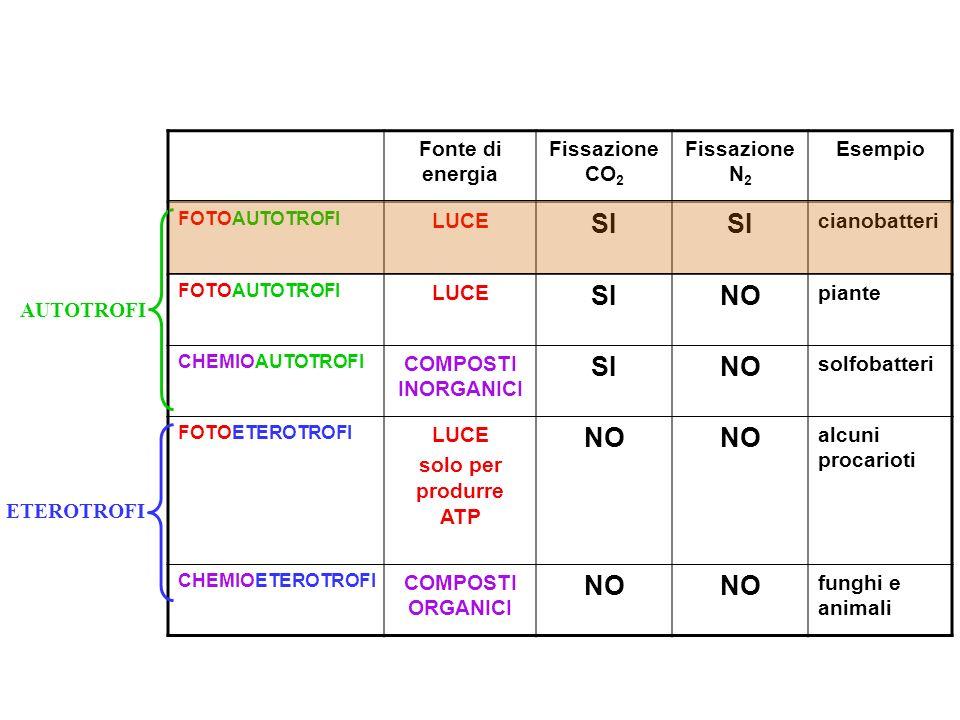 Fonte di energia Fissazione CO 2 Fissazione N 2 Esempio FOTOAUTOTROFI LUCE SI cianobatteri FOTOAUTOTROFI LUCE SINO piante CHEMIOAUTOTROFI COMPOSTI INO
