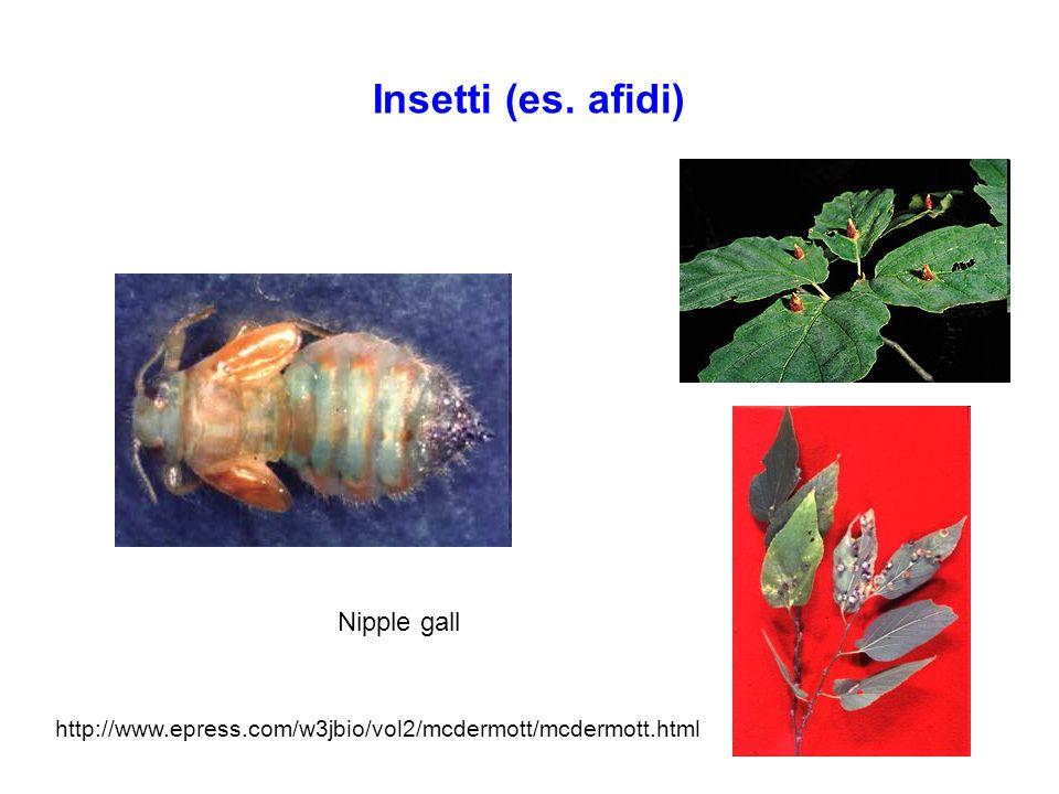Ormoni e fotomorfogenesi: citochinine BuioBuio + citochinine Citochinine producono una fenocopia del mutante det: aumentano la de- eziolatura di piante cresciute al buio I plastidi si sviluppano parzialmente