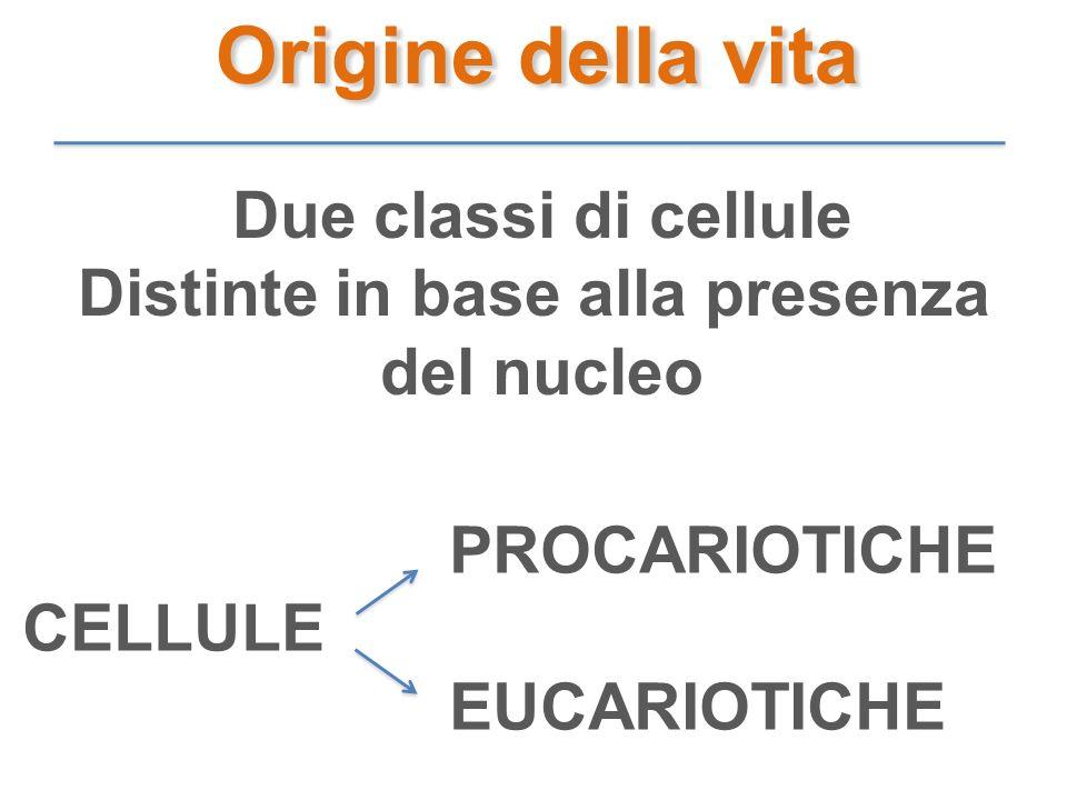 Origine della vita Due classi di cellule Distinte in base alla presenza del nucleo PROCARIOTICHE CELLULE EUCARIOTICHE