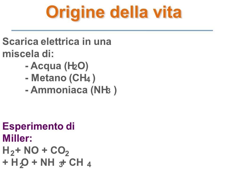 Scarica elettrica in una miscela di: - Acqua (H O) - Metano (CH ) - Ammoniaca (NH ) Esperimento di Miller: H + NO + CO + H O + NH + CH 2 4 3 2 2 2 34