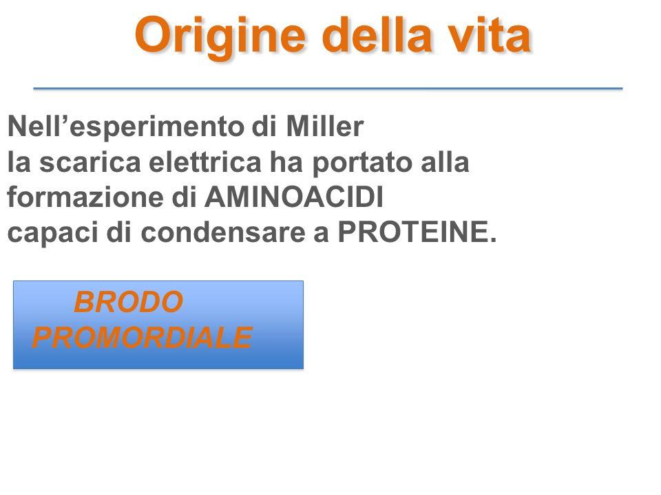 Nellesperimento di Miller la scarica elettrica ha portato alla formazione di AMINOACIDI capaci di condensare a PROTEINE. BRODO PROMORDIALE Origine del