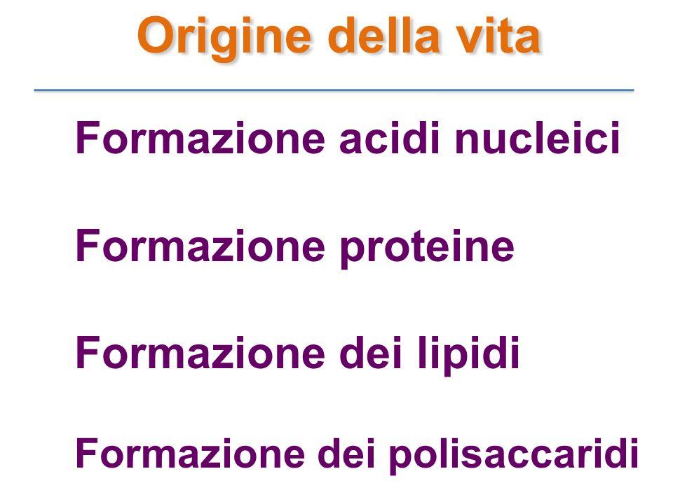 Formazione acidi nucleici Formazione proteine Formazione dei lipidi Formazione dei polisaccaridi Origine della vita