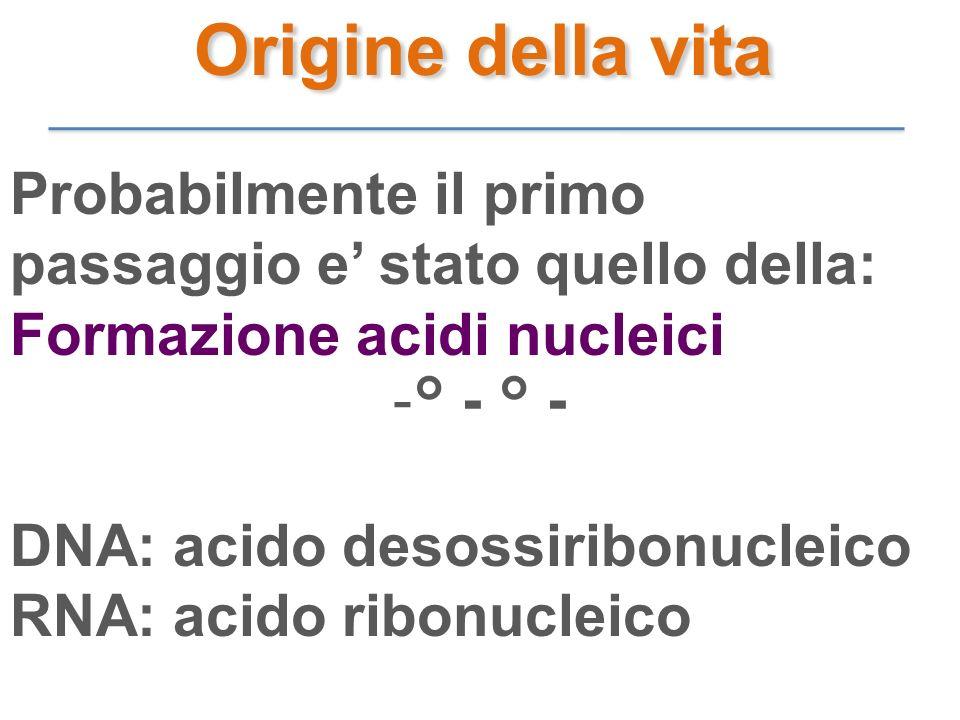 Probabilmente il primo passaggio e stato quello della: Formazione acidi nucleici -° - ° - DNA: acido desossiribonucleico RNA: acido ribonucleico Origi