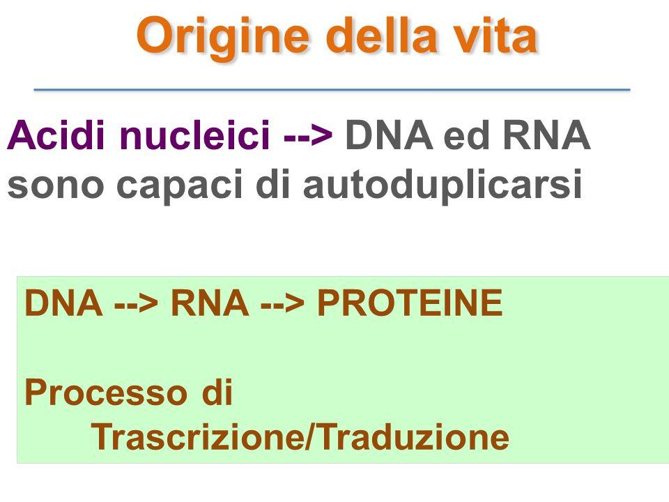 Acidi nucleici --> DNA ed RNA sono capaci di autoduplicarsi DNA --> RNA --> PROTEINE Processo di Trascrizione/Traduzione Origine della vita